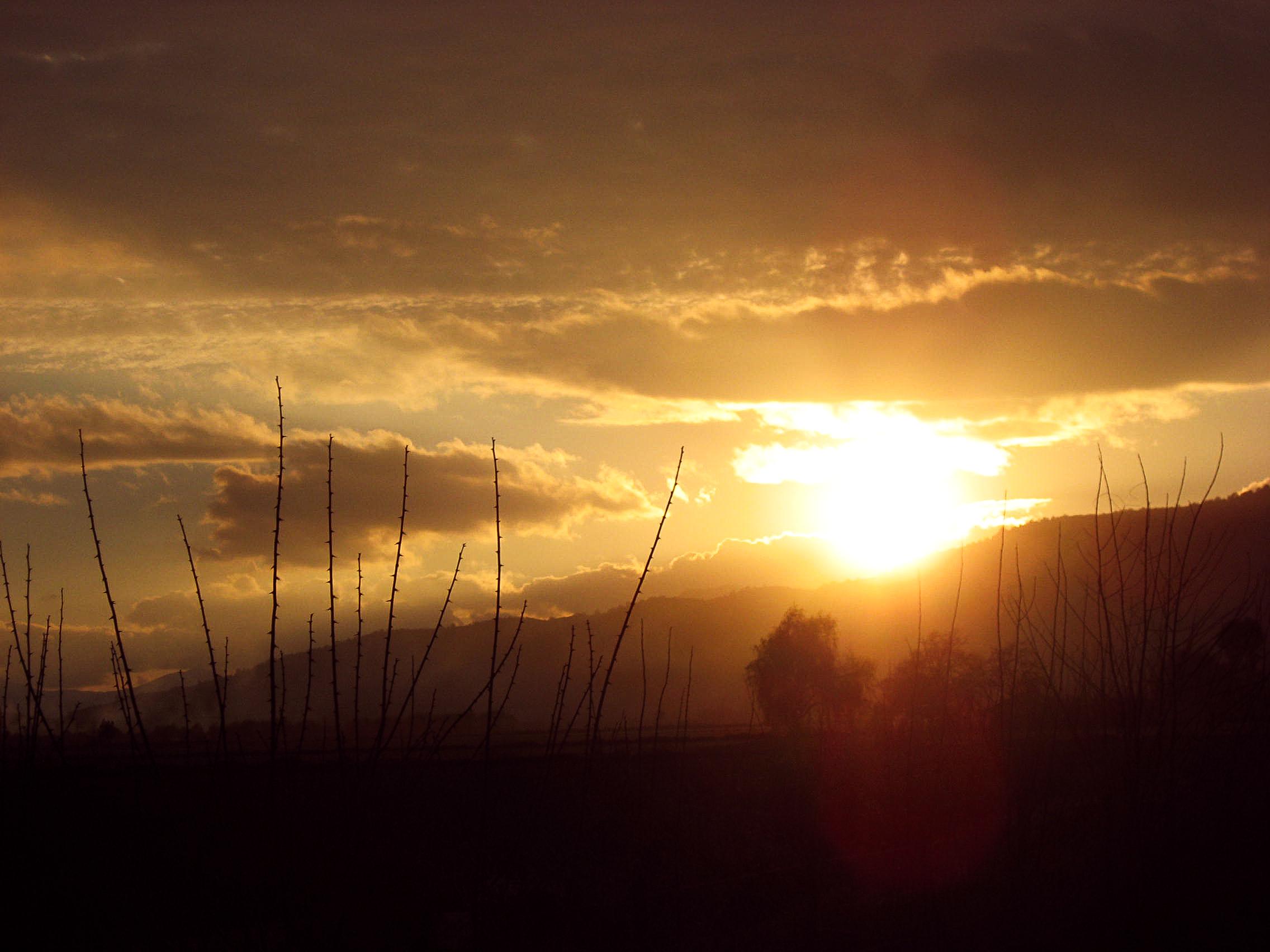 sant_PLACE_horseriding-0557-_sunset-through-vines.jpg