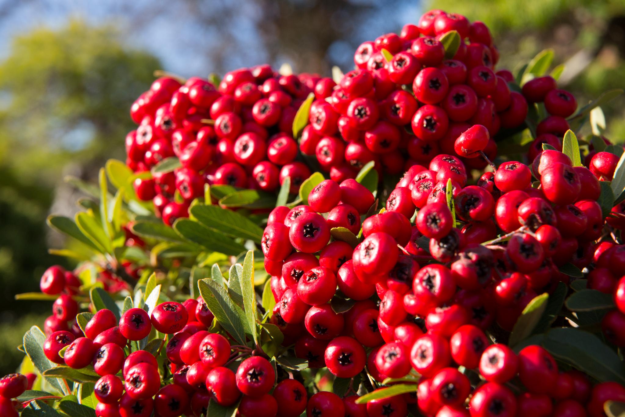 4613-japan-nature-autumn-colors.jpg