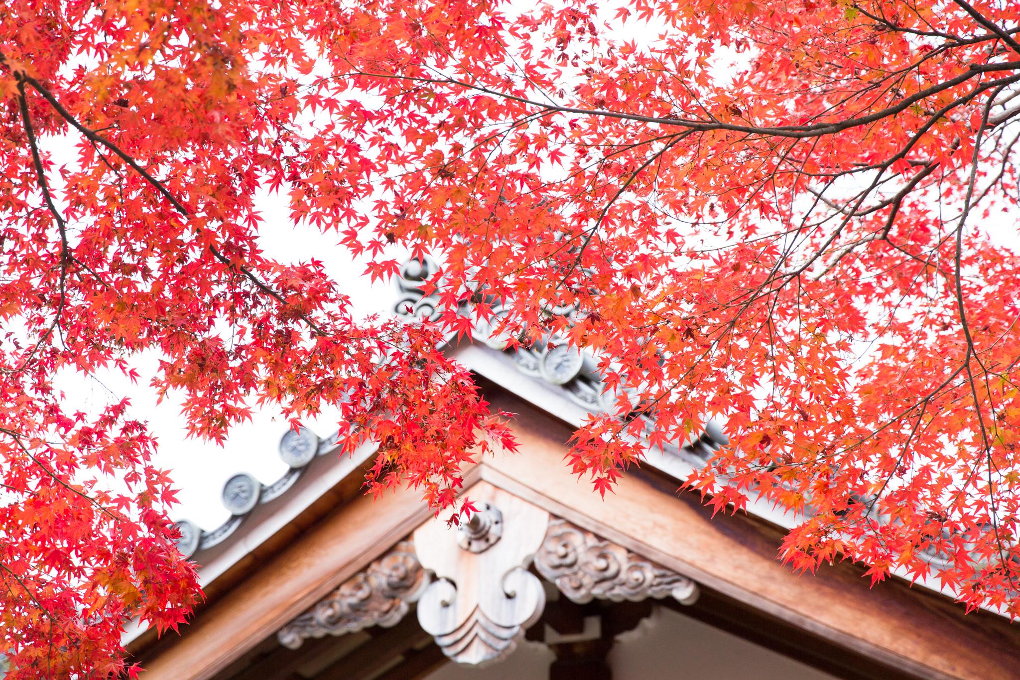 4868-japan-nature-autumn-colors.jpg
