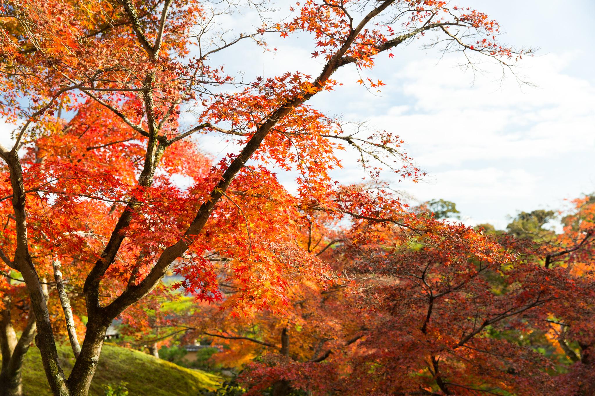 5001-japan-nature-autumn-colors.jpg