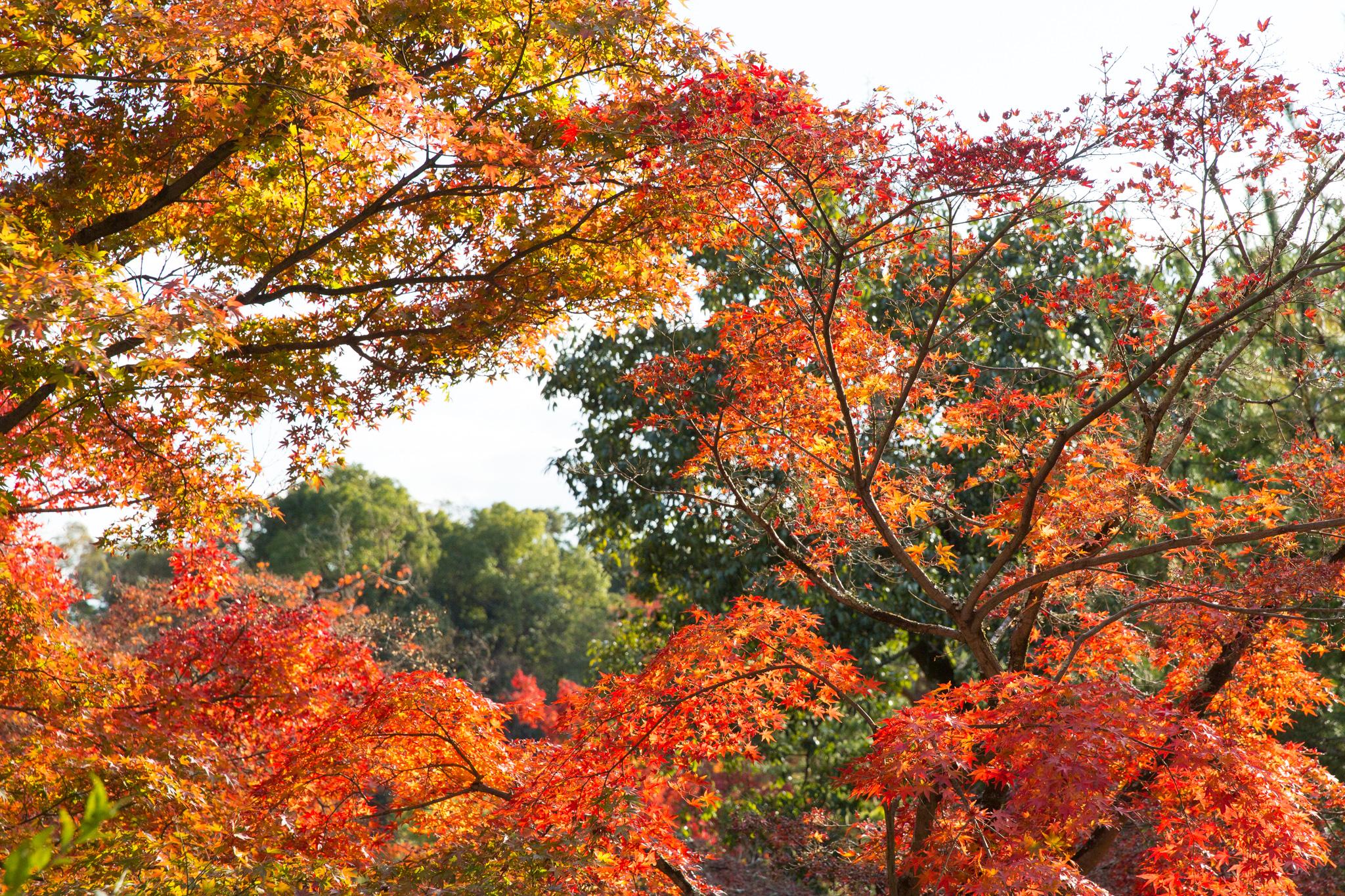 5021-japan-nature-autumn-colors.jpg