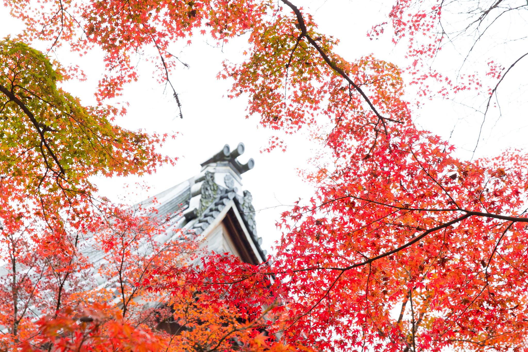 5260-japan-nature-cold-winter.jpg