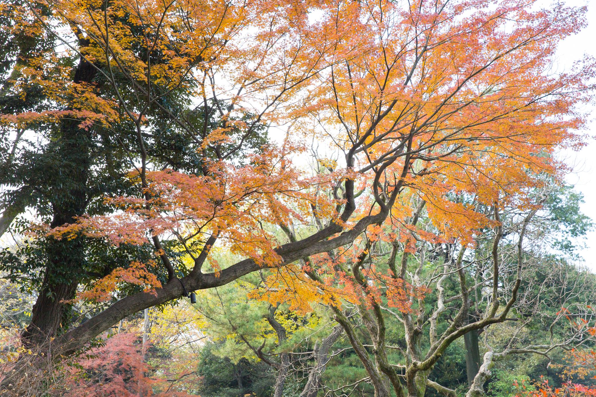 6037-japan-nature-beautiful-trees.jpg