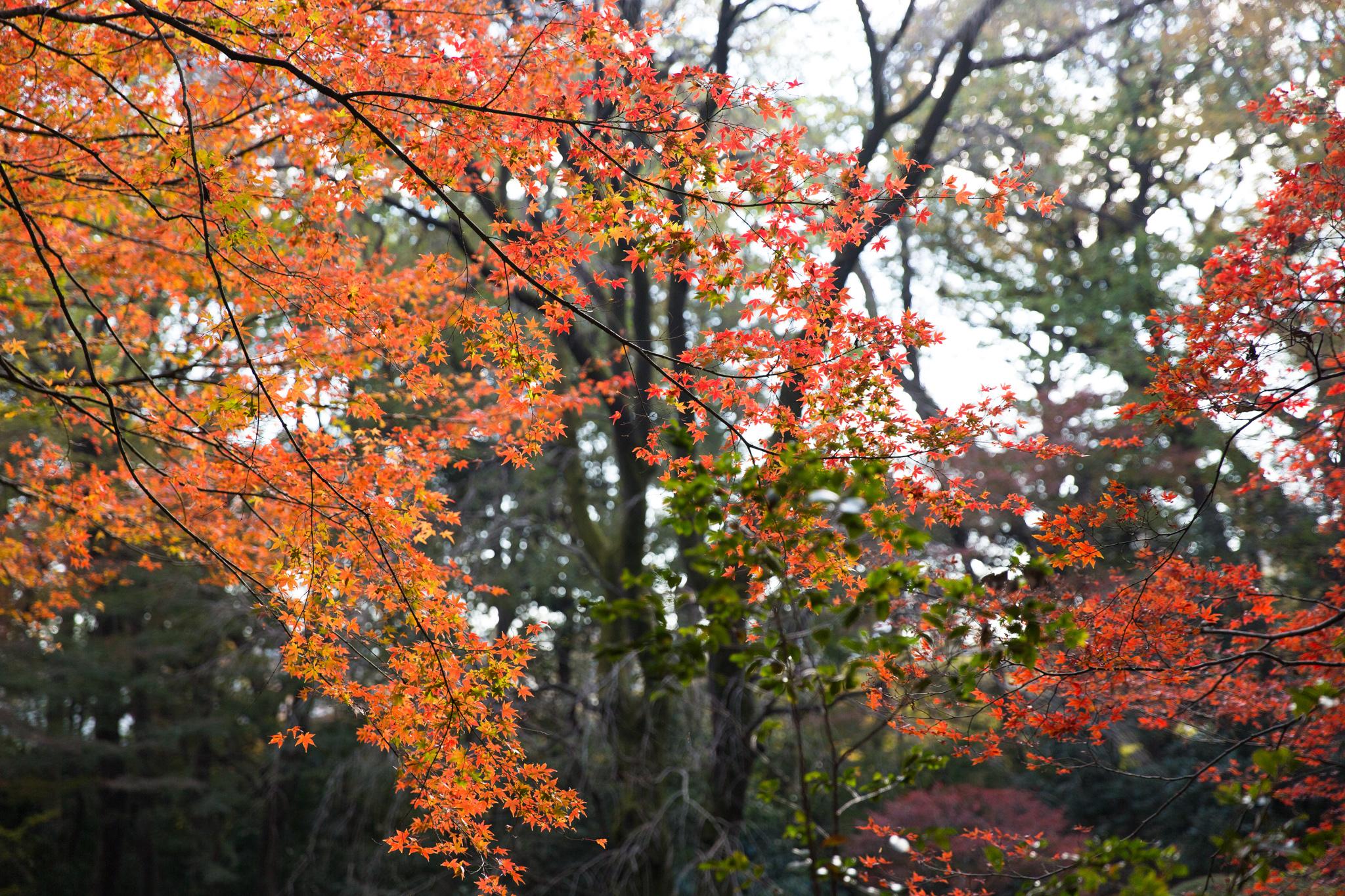 6042-japan-nature-beautiful-trees.jpg