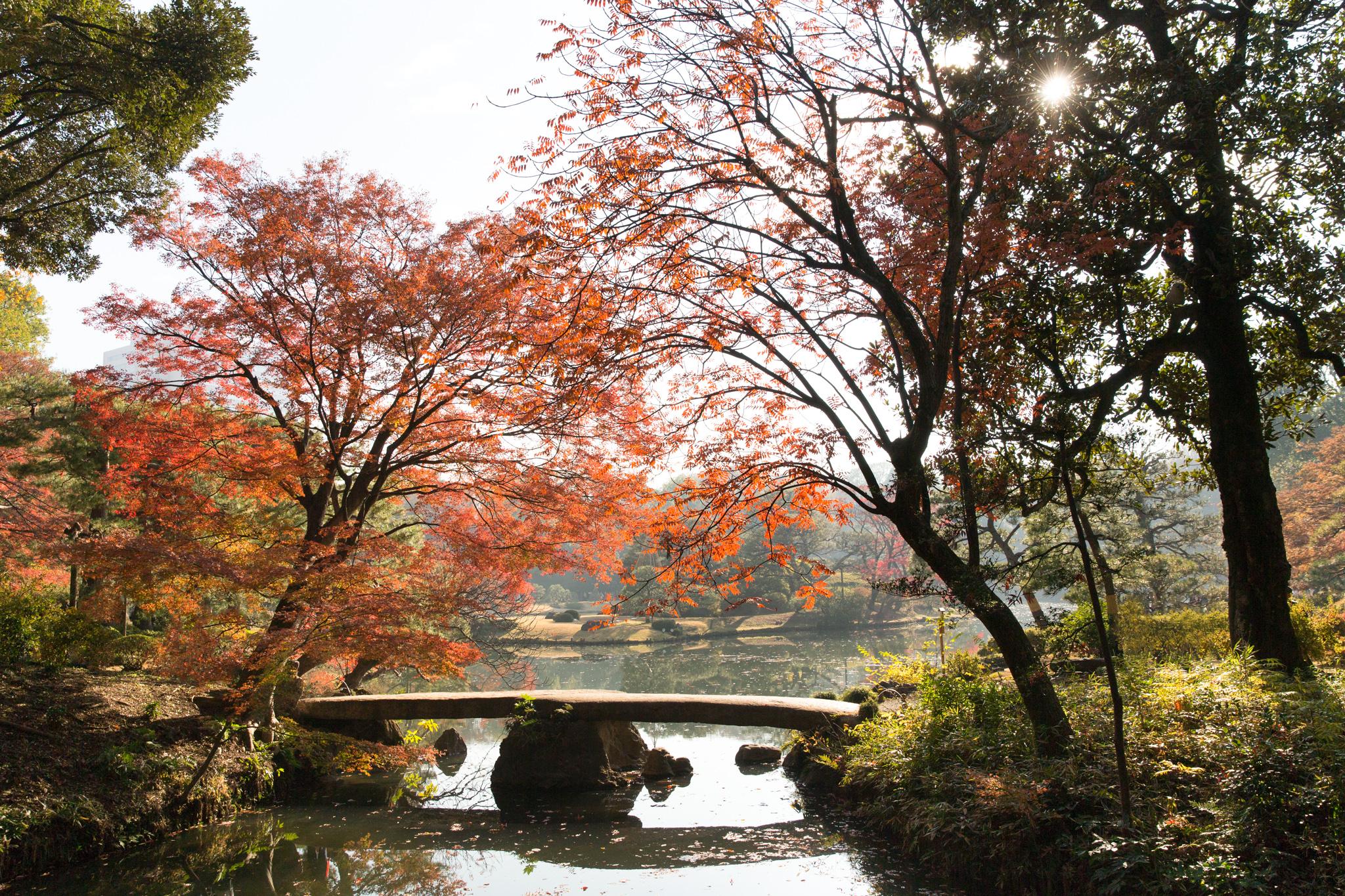 6071-japan-nature-beautiful-trees.jpg