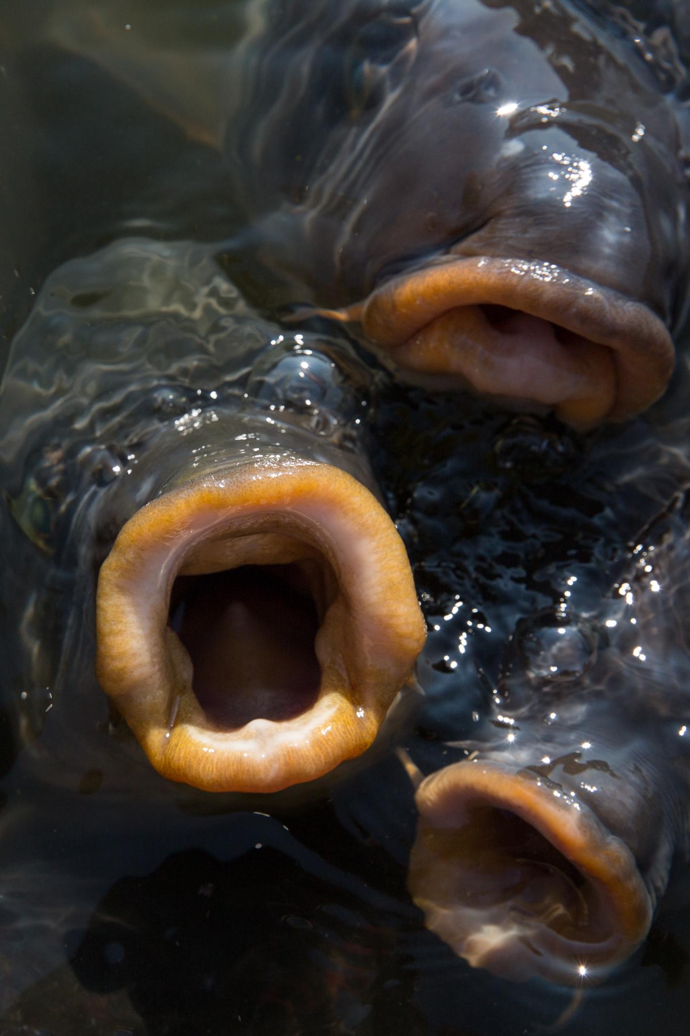 5972-japan-wildlife-giant-fish.jpg