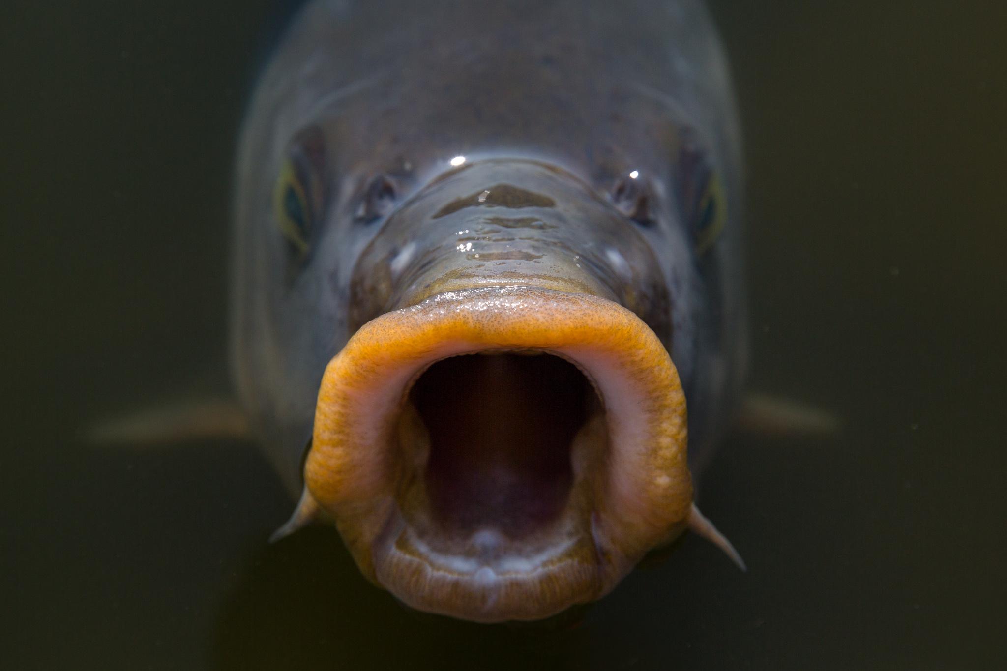 5934-japan-wildlife-giant-fish.jpg
