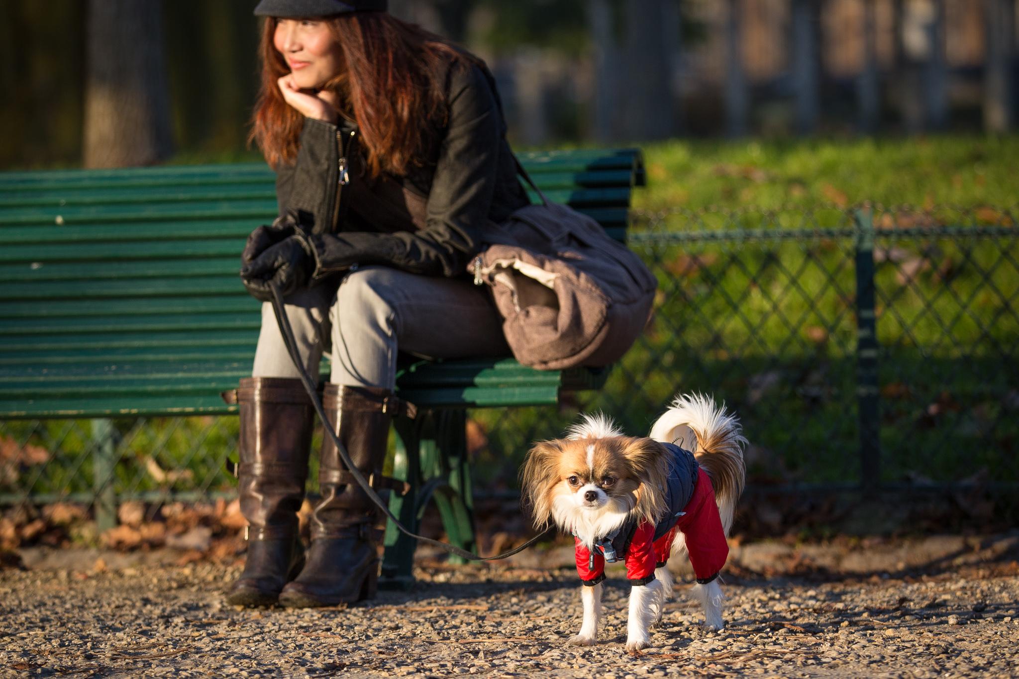 9826-parisian-pet-dog.jpg