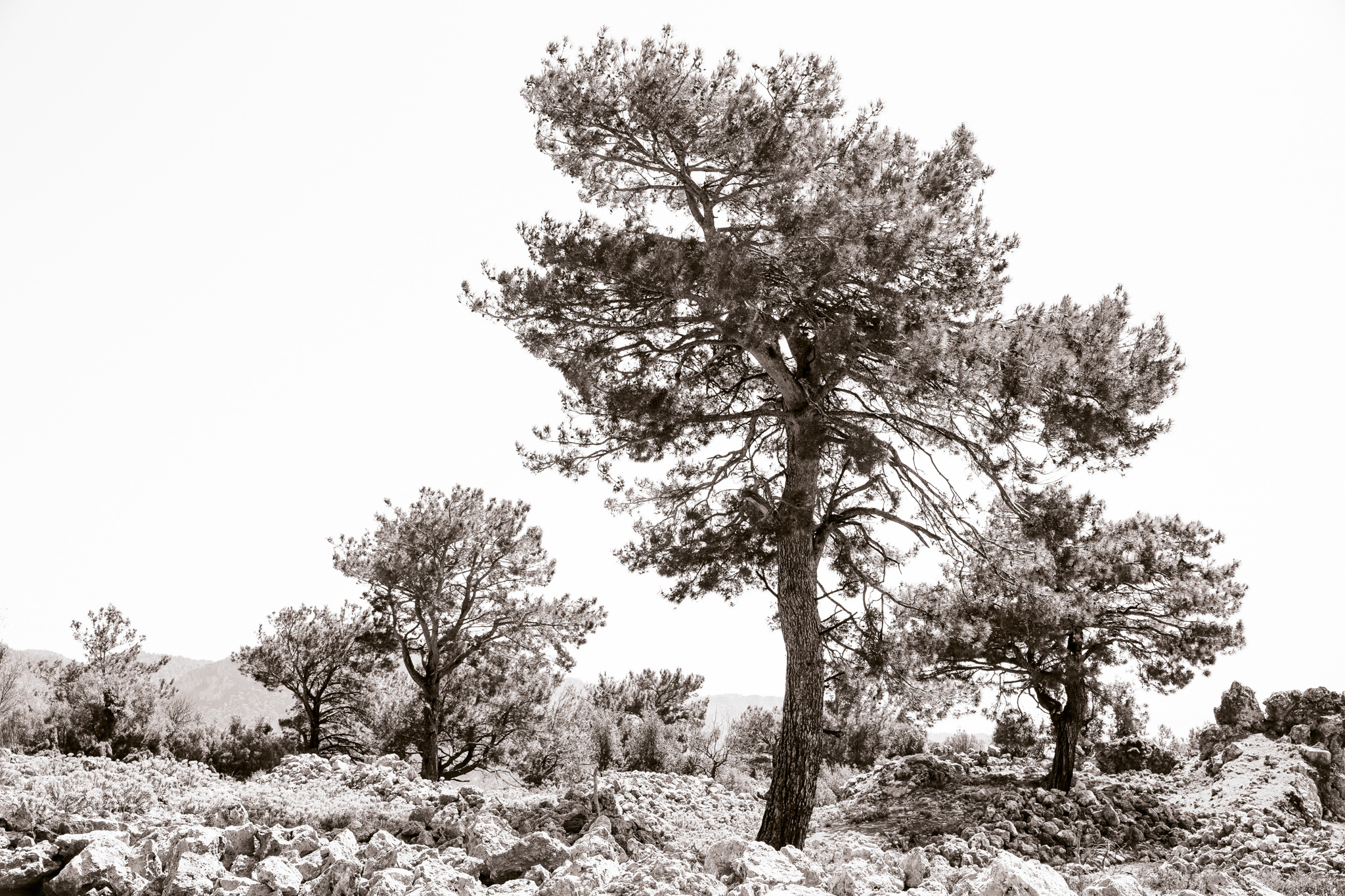 lycian-way_village1-2737-several-lone-trees.jpg