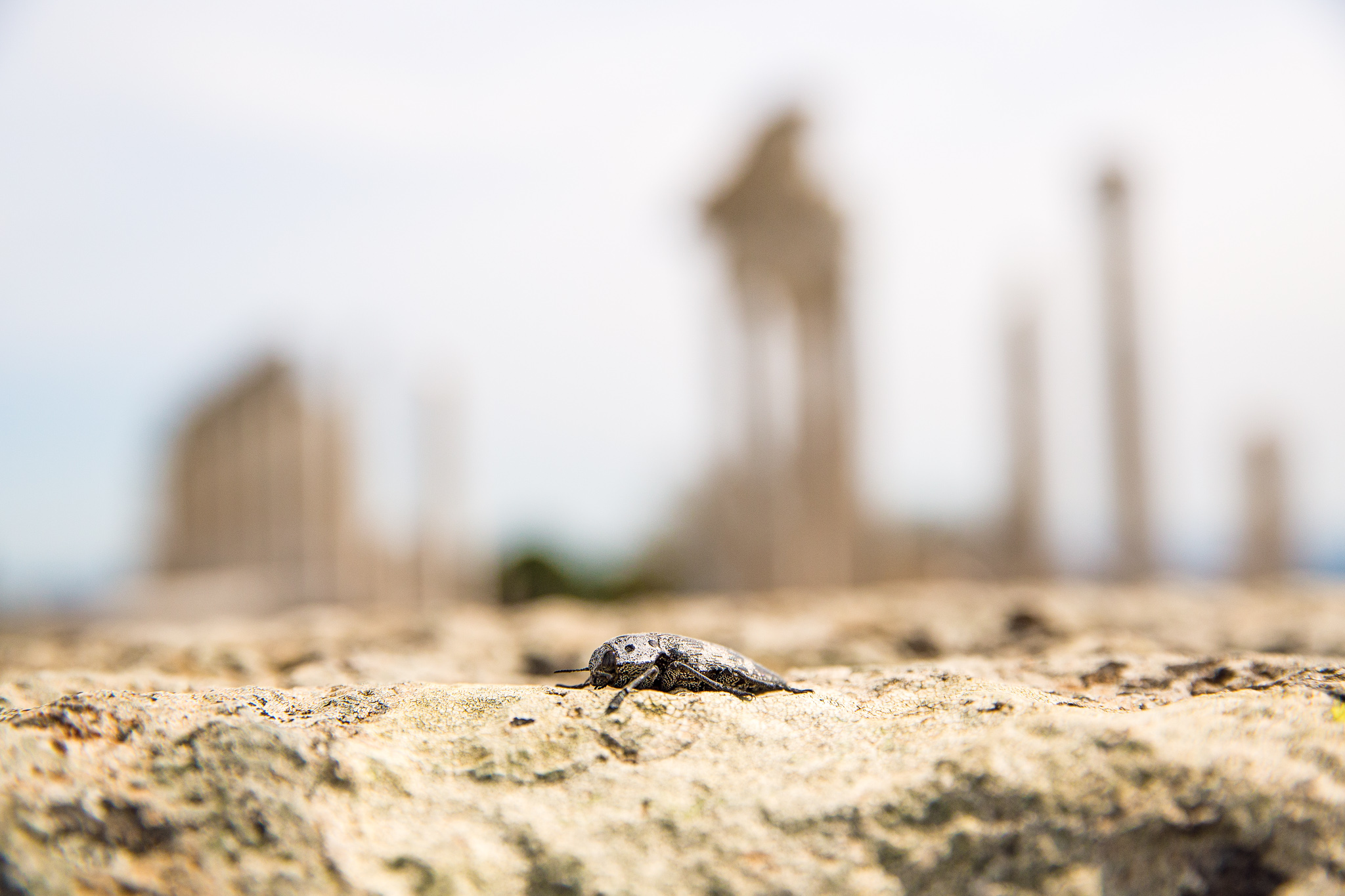 bergama_ruins-pergamon-2188-insect-with-pillars-in-the-background.jpg