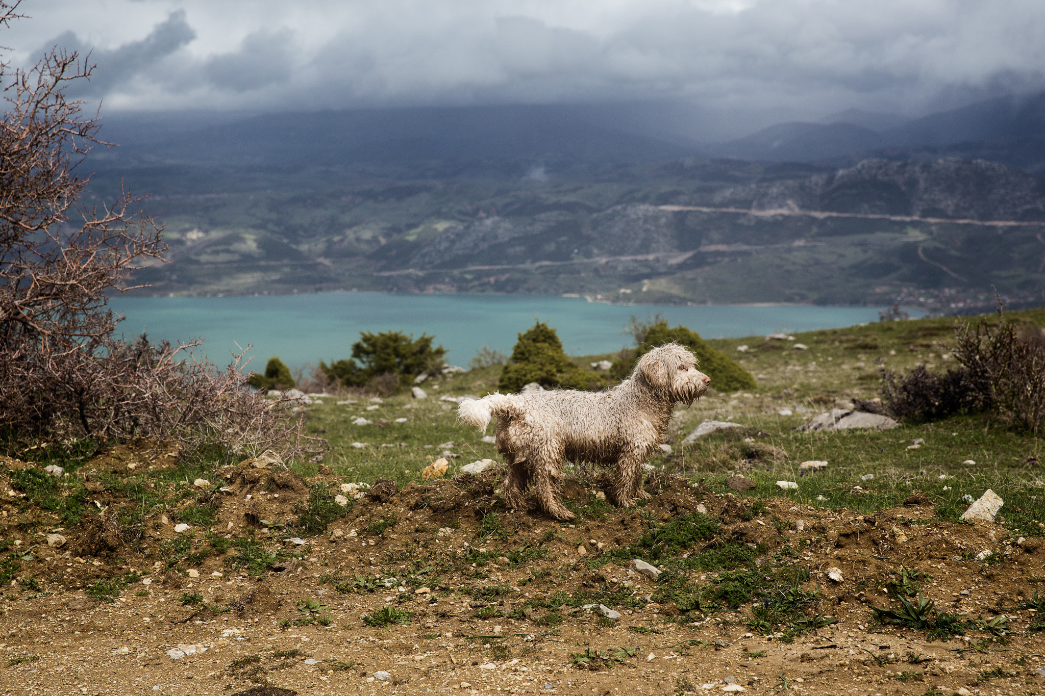 egirdir-to-silivri-mountain-3570-little-scruffy-dog-infront-of-lake.jpg