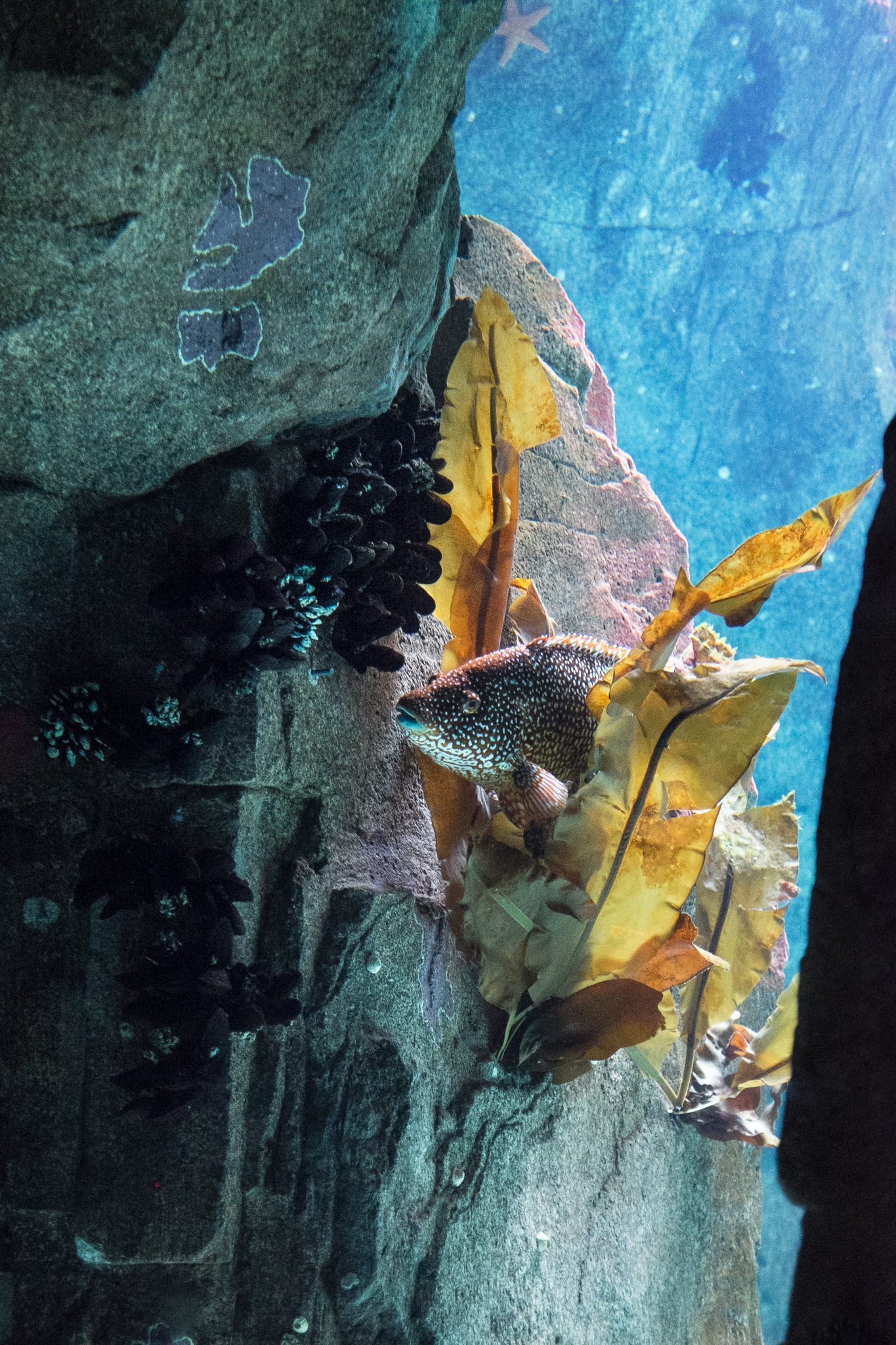 4572-portugal-aquarium-fish.jpg