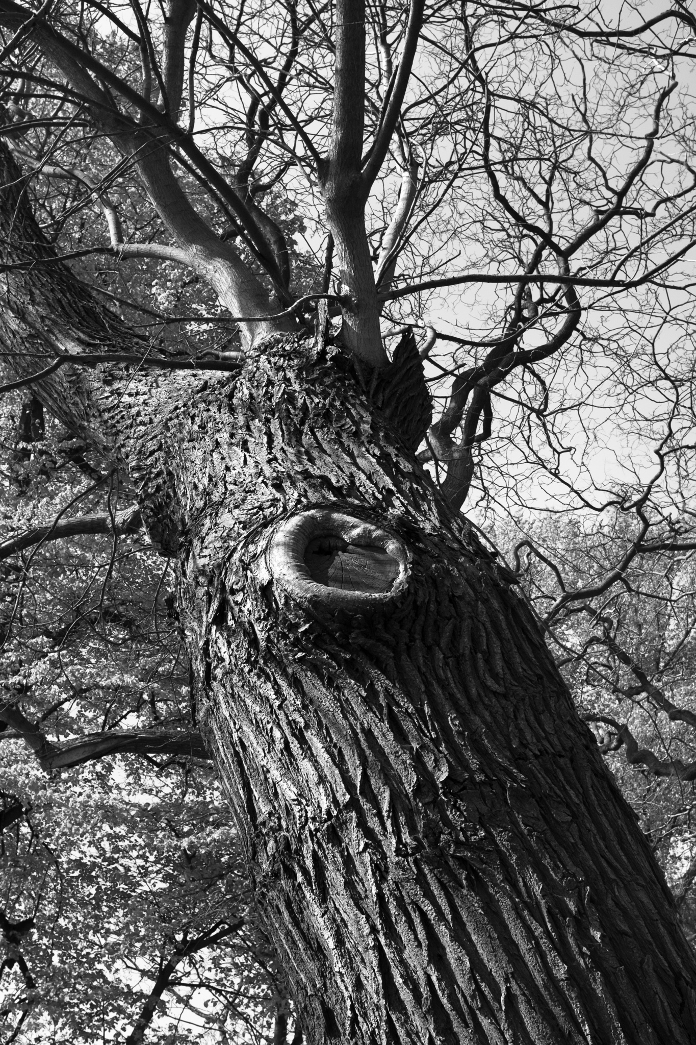 3576-nature-in-belgium.jpg