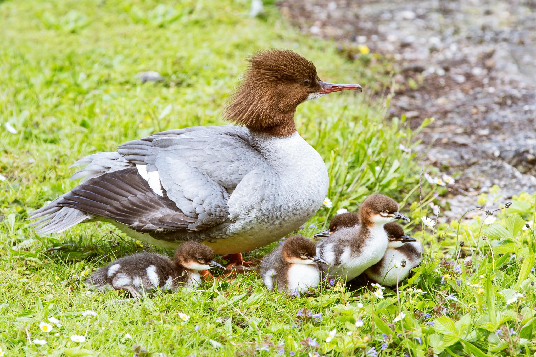 1000-bavarian-bird-in-bavaria.jpg