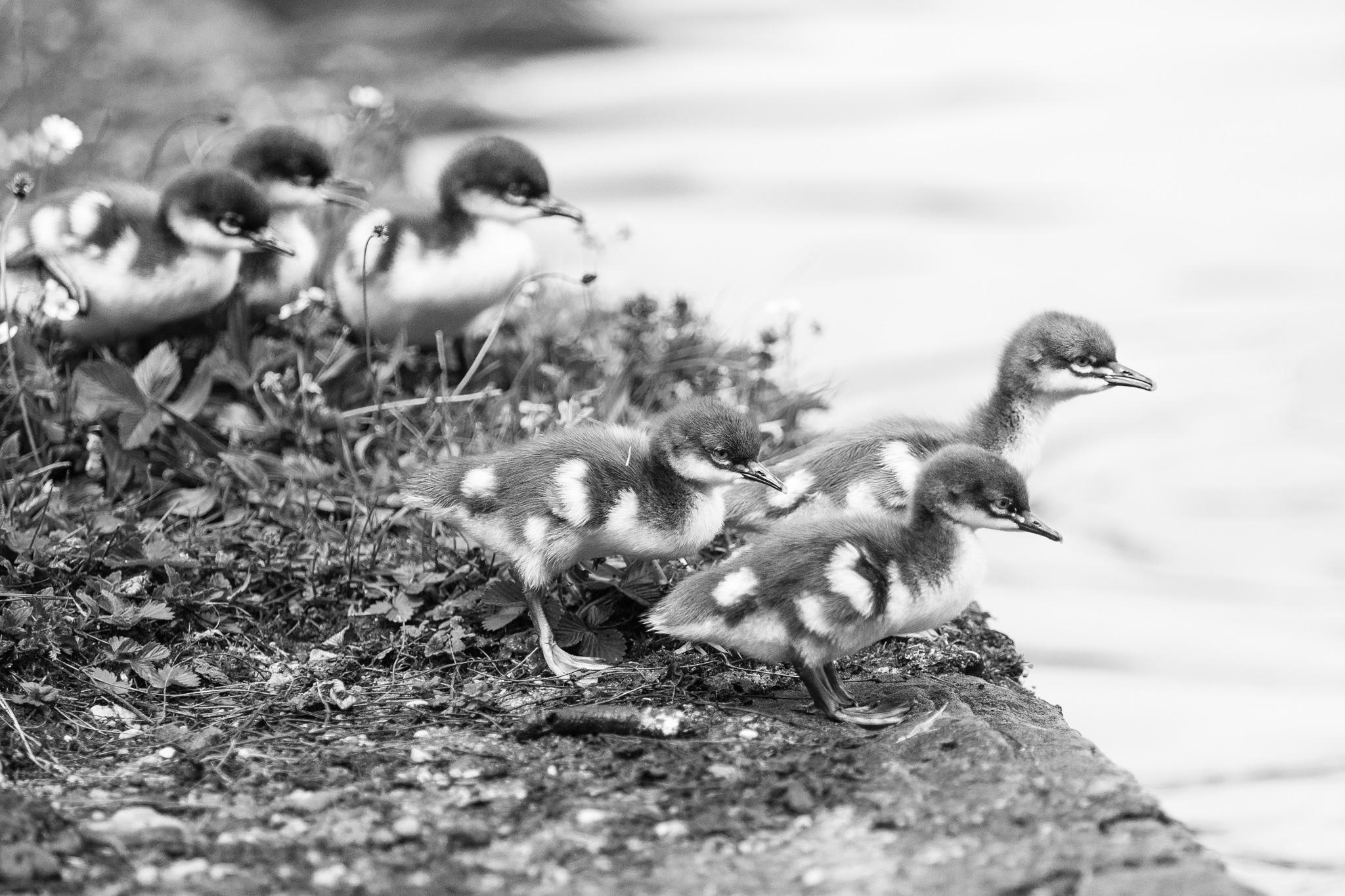 1034-bavarian-bird-in-bavaria.jpg