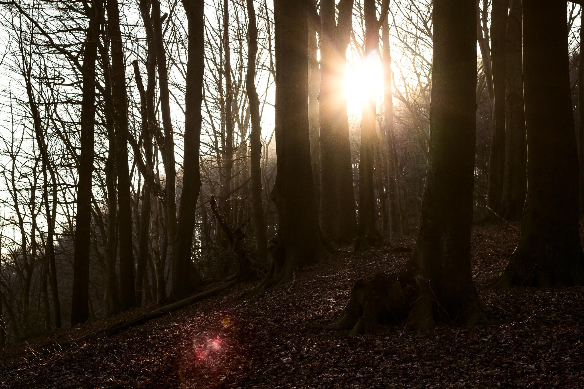 -north-rhine-westphalia-best-nature-walks-2.jpg
