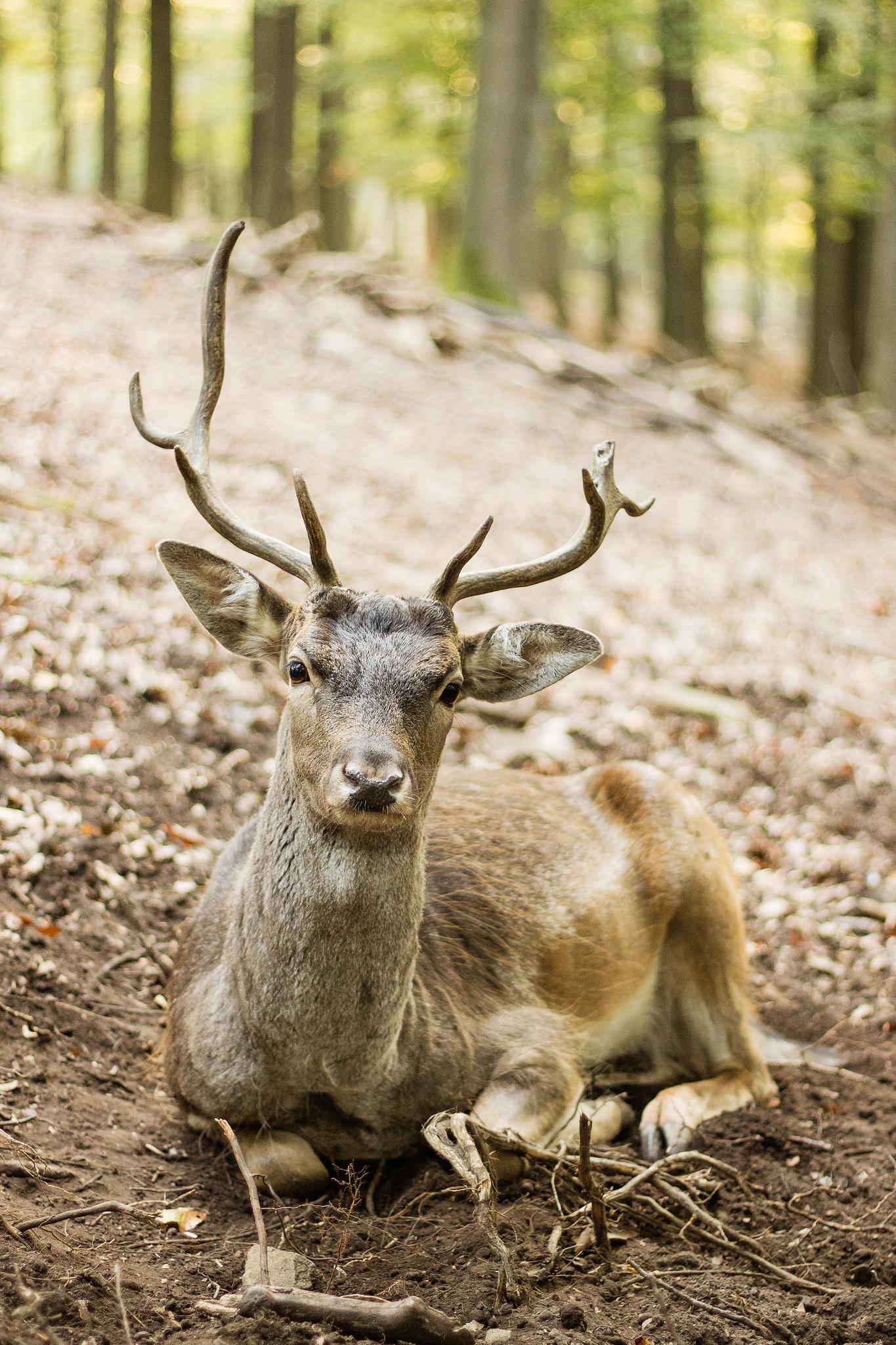 -north-rhine-westphalia-wildlife-3.jpg