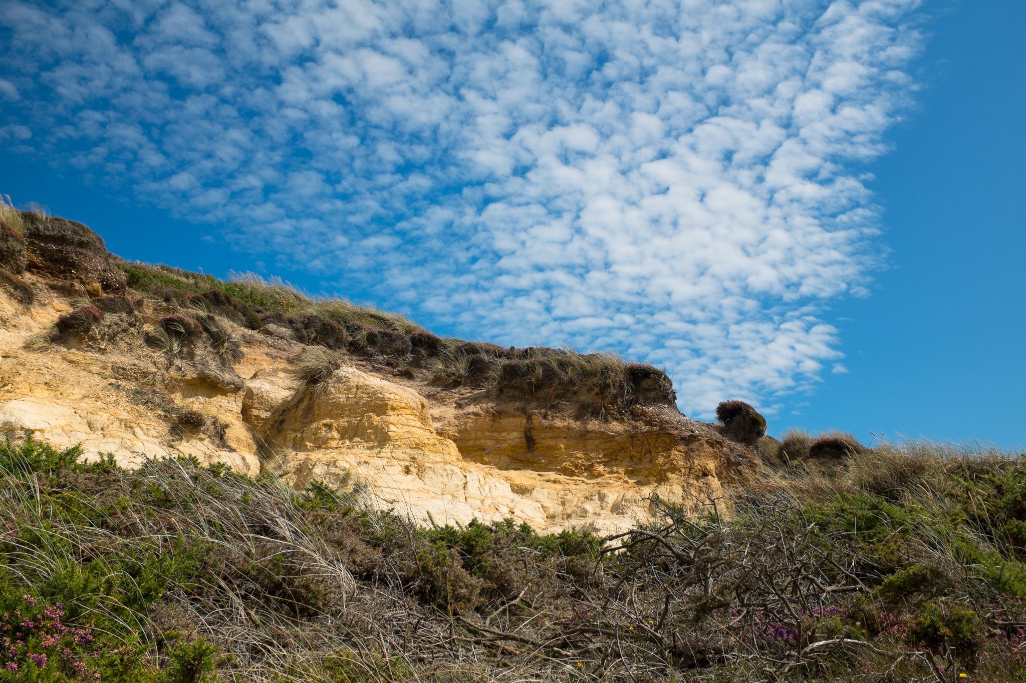 4806-nature-lymington-landscape.jpg