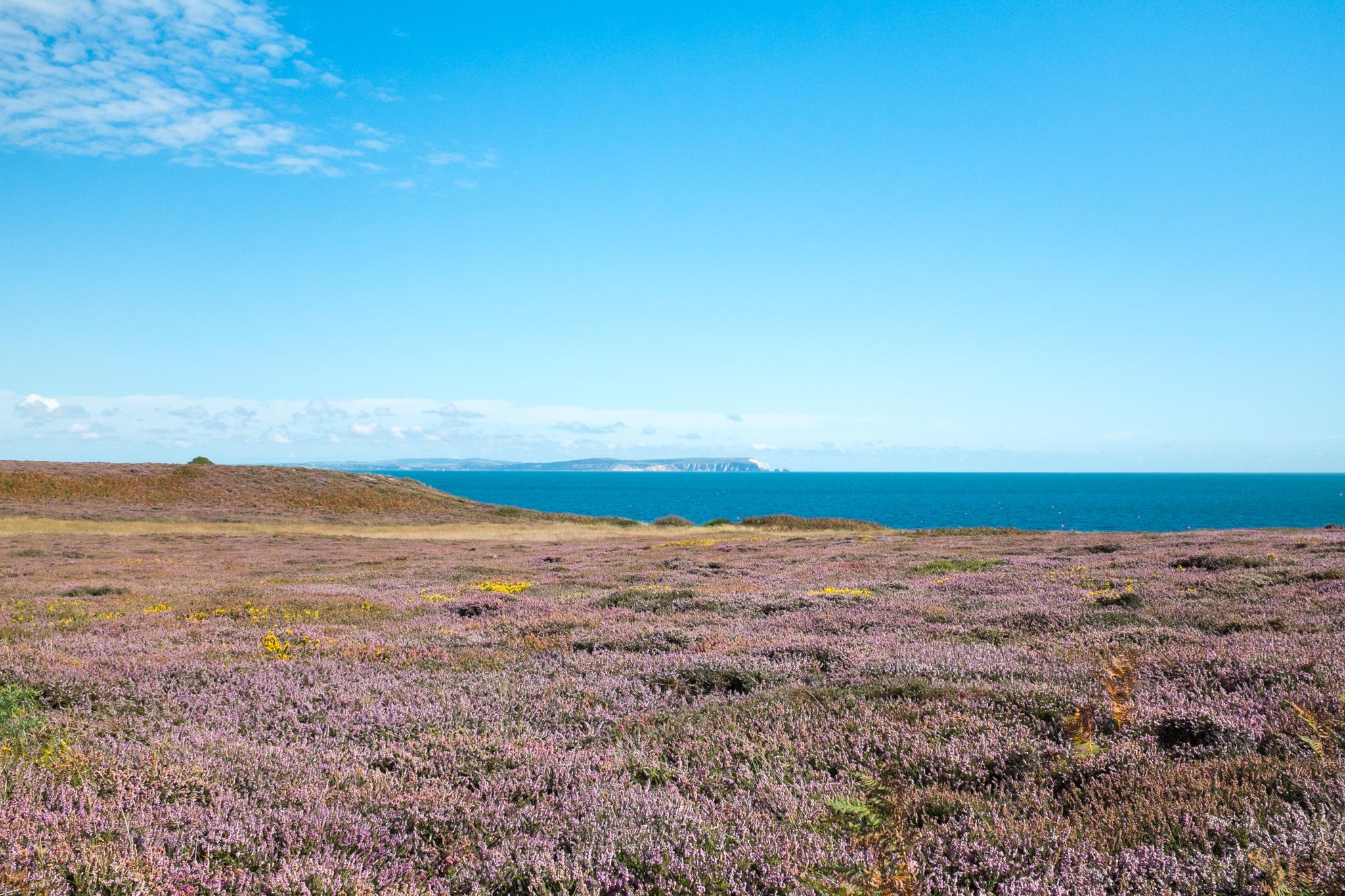 4846-nature-lymington-landscape.jpg