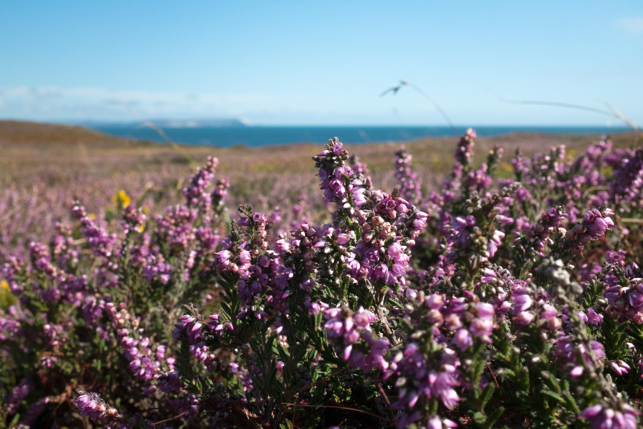 4866-nature-lymington-bournemouth-coast.jpg