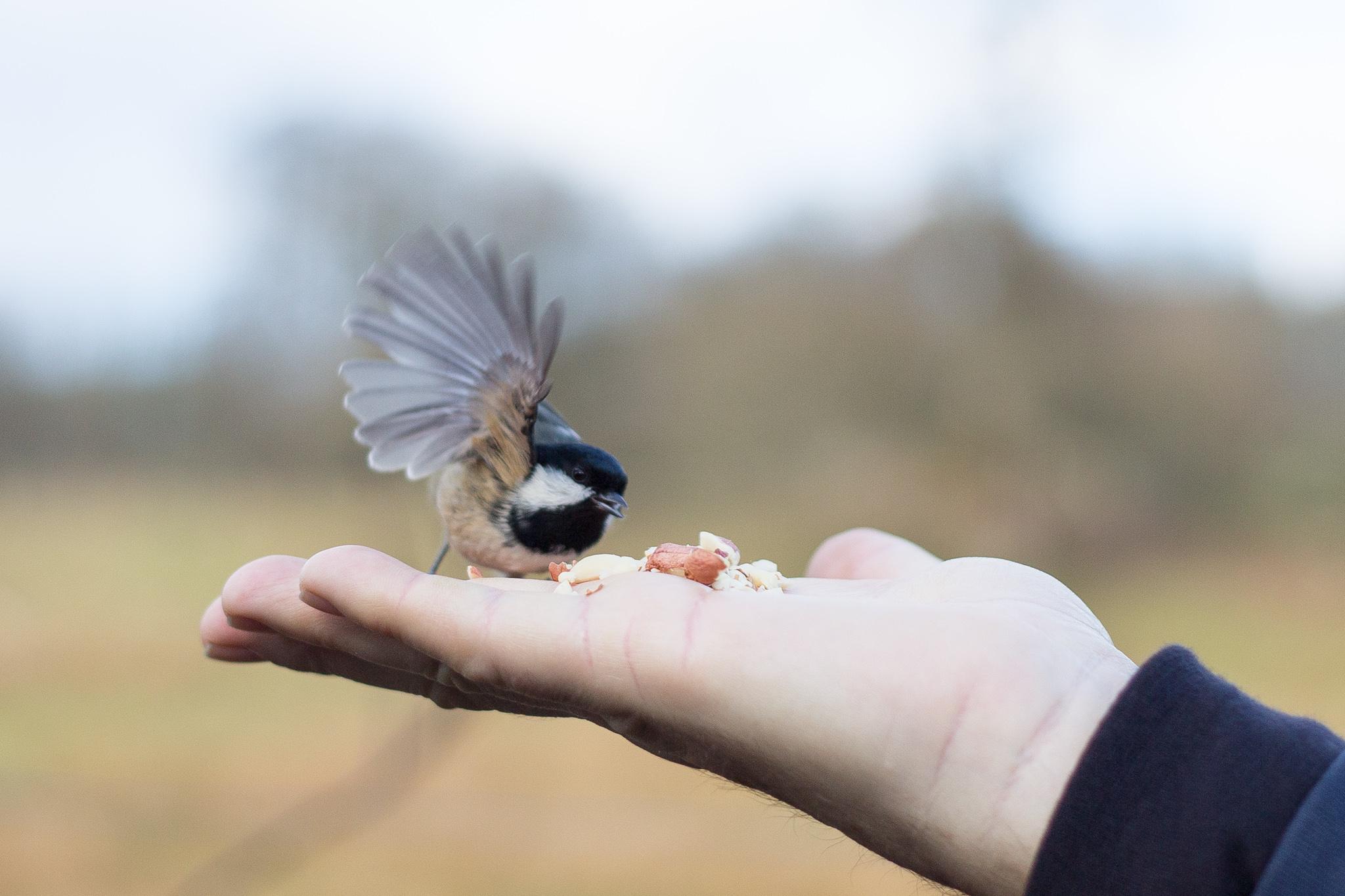 2932-uk-best-wildlife.jpg