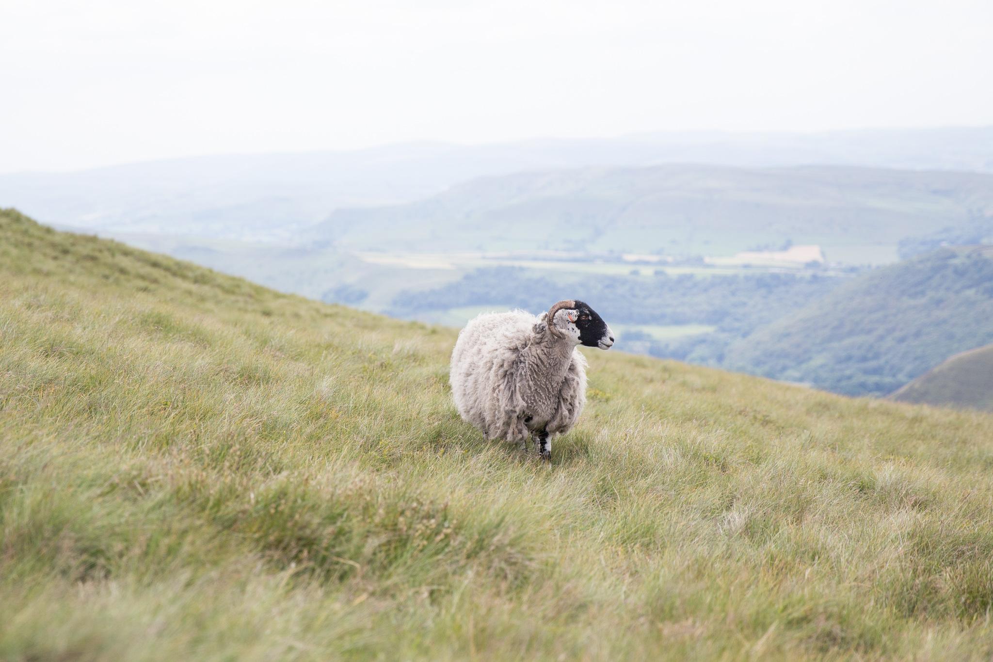 7845-uk-best-wildlife.jpg
