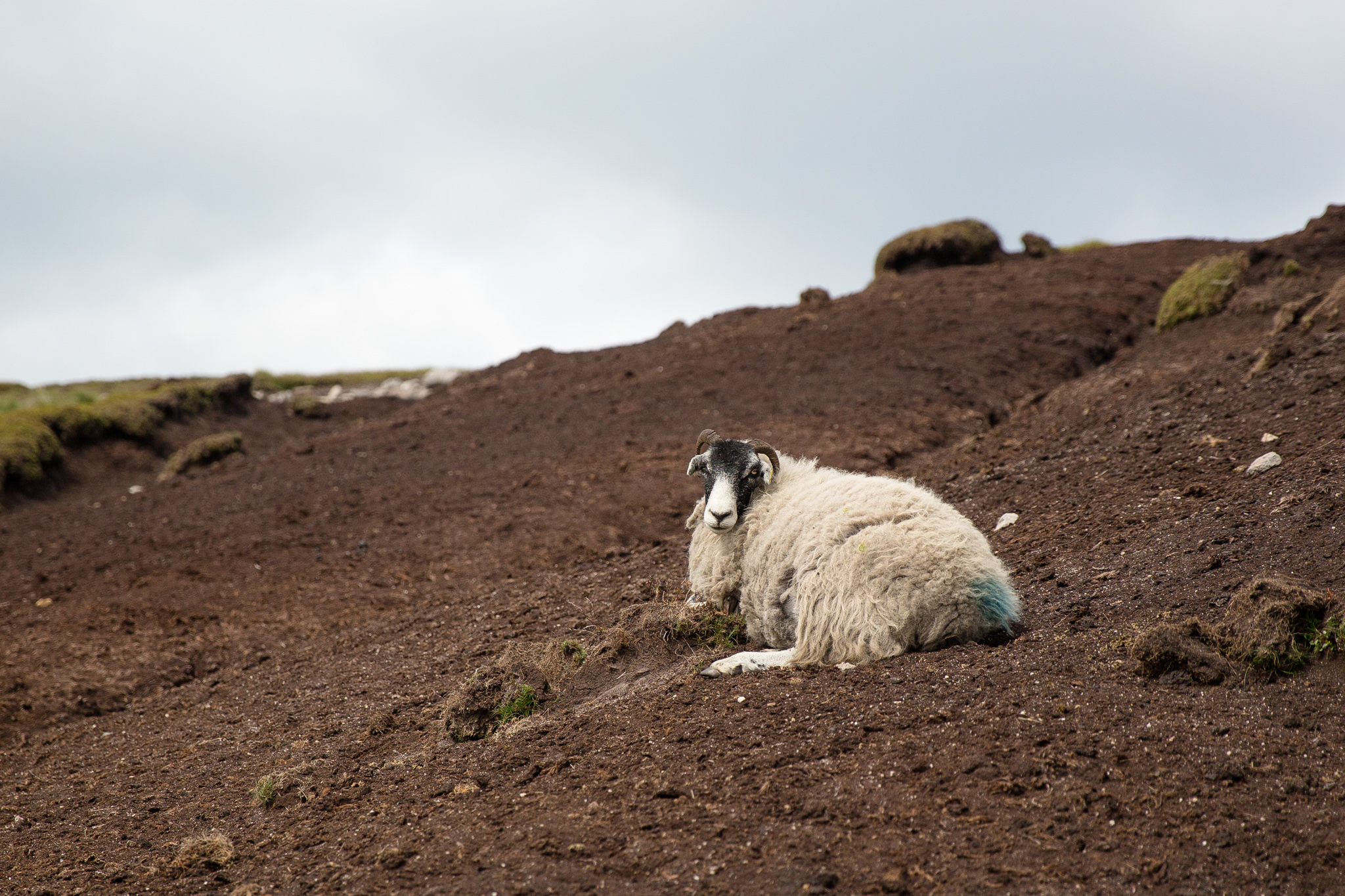 7920-uk-best-wildlife.jpg