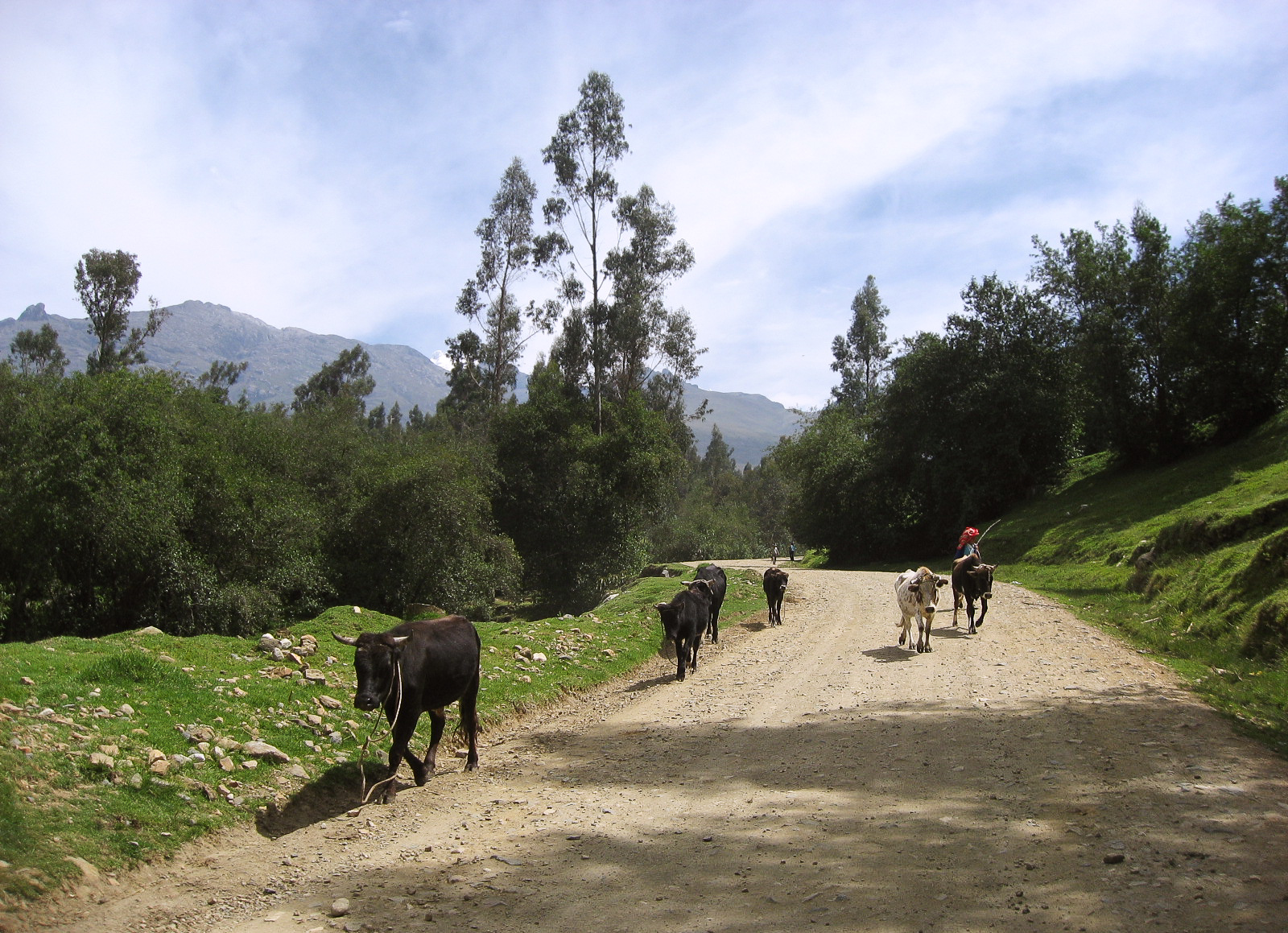 huaraz_ruins_and_walk-to-866-bulls-on-dirt-road.jpg