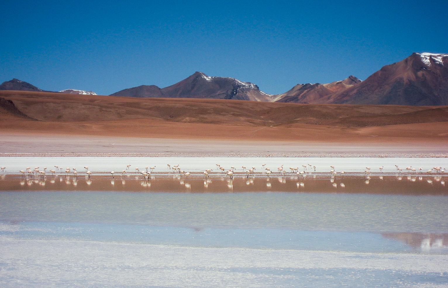 uyuni_salt-flats_day2-8857-flamingos-in-distance.jpg
