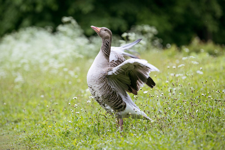 1127-bavarian-bird-in-bavaria.jpg
