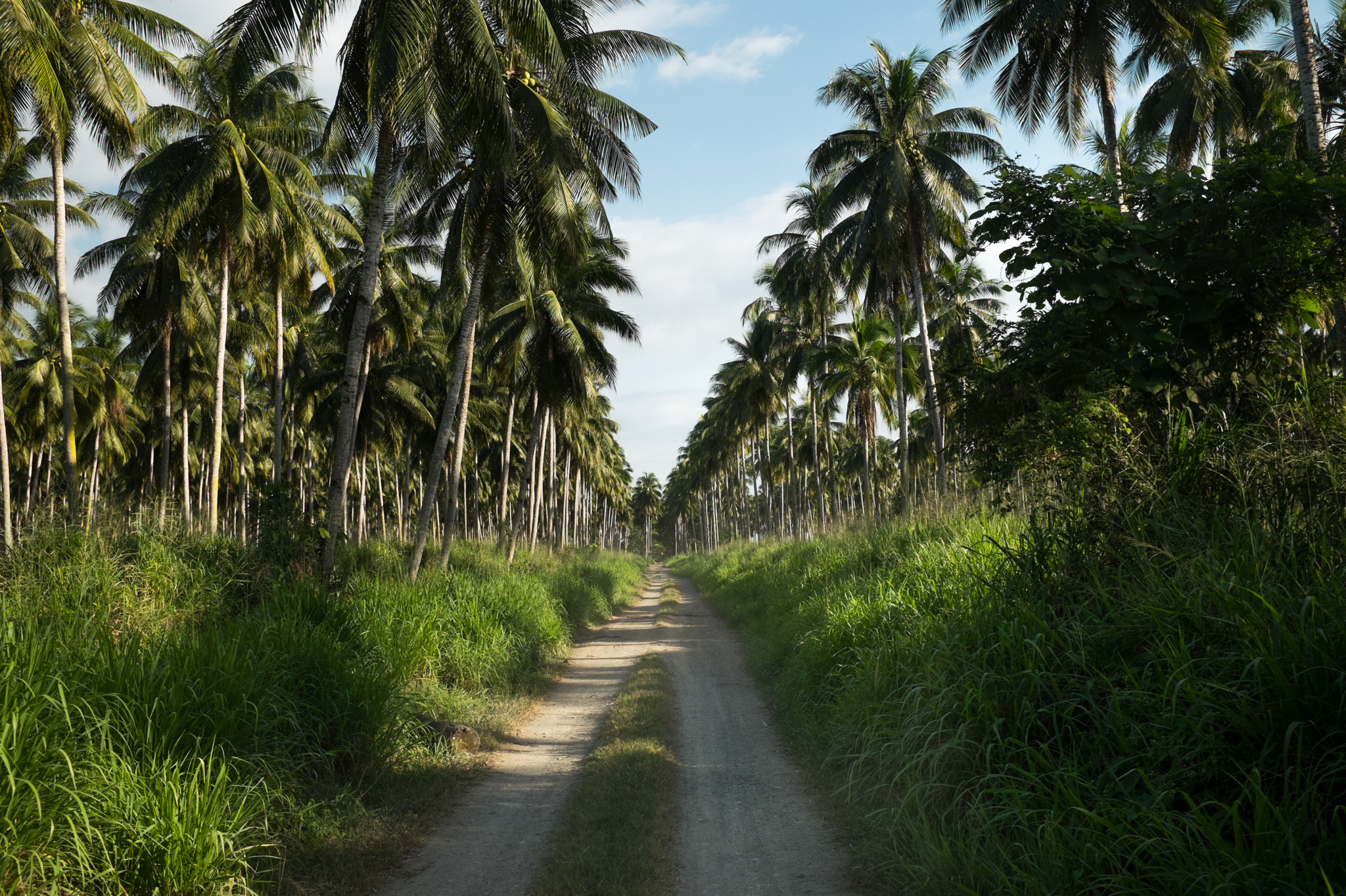3019-philippines_tropical-sights.jpg