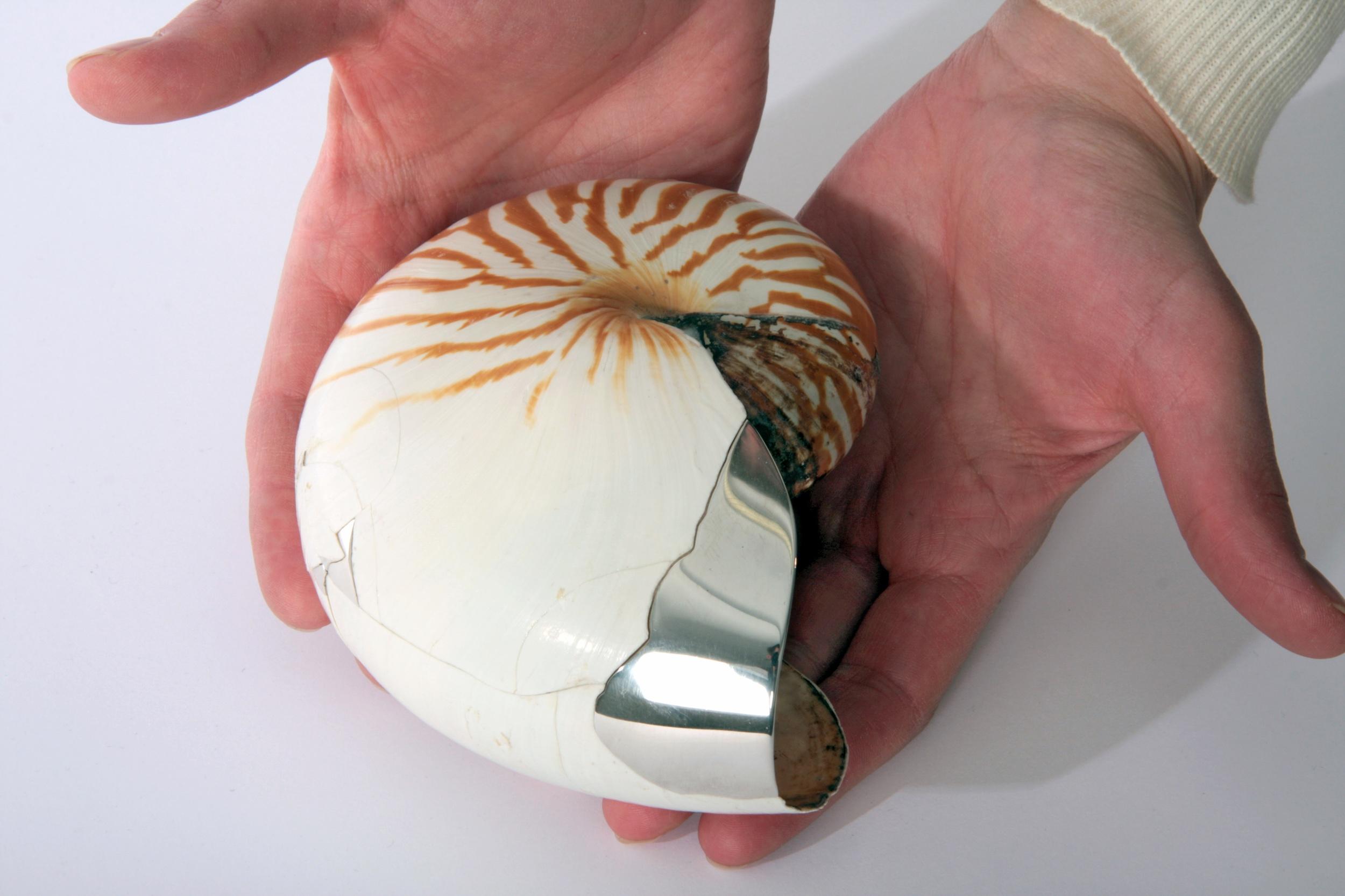 Nautillus shell_detail.jpg