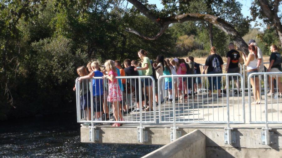 First-school-group-on-fish-viewing-platform-10022012.jpeg