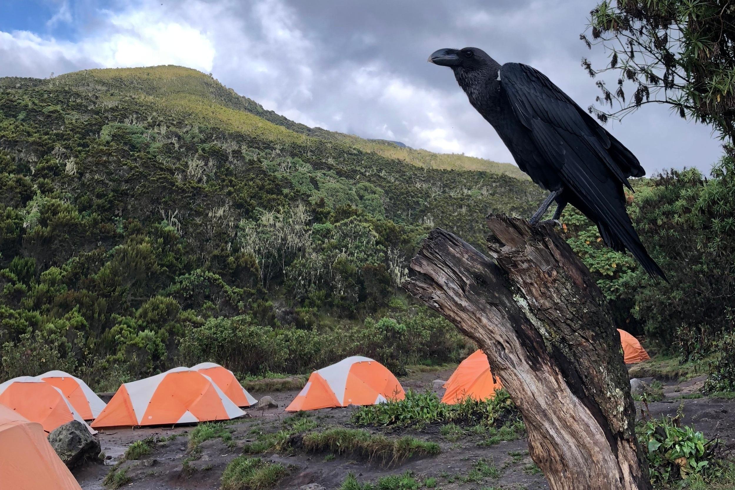 REISEBERICHT - Der schriftliche Bericht über meine Wanderung auf den Gipfel des Kilimanjaros via Machame Route.
