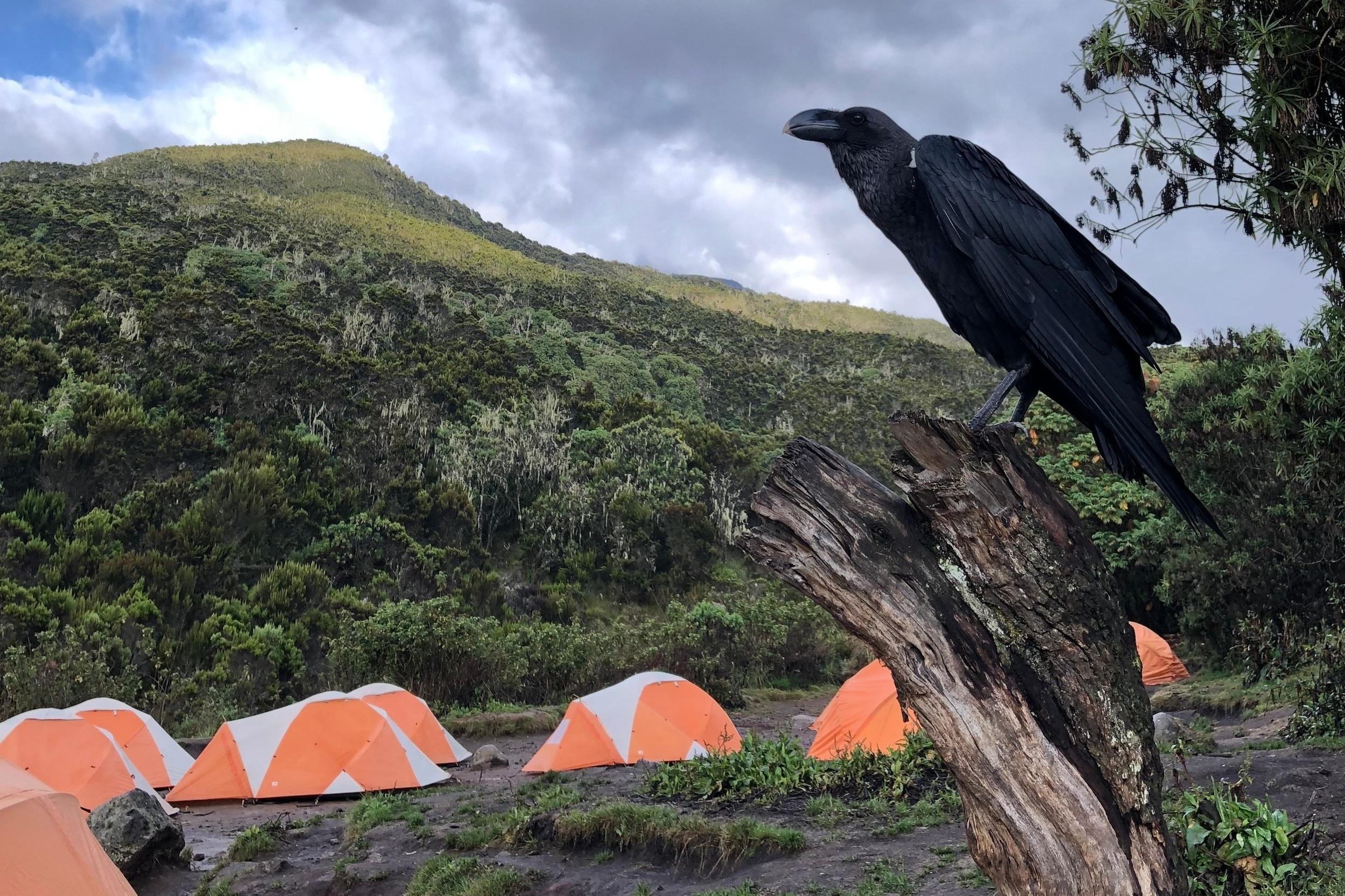 REISEBERICHT. - Der schriftliche Bericht über meine Wanderung auf den Gipfel des Kilimanjaros via Machame Route.