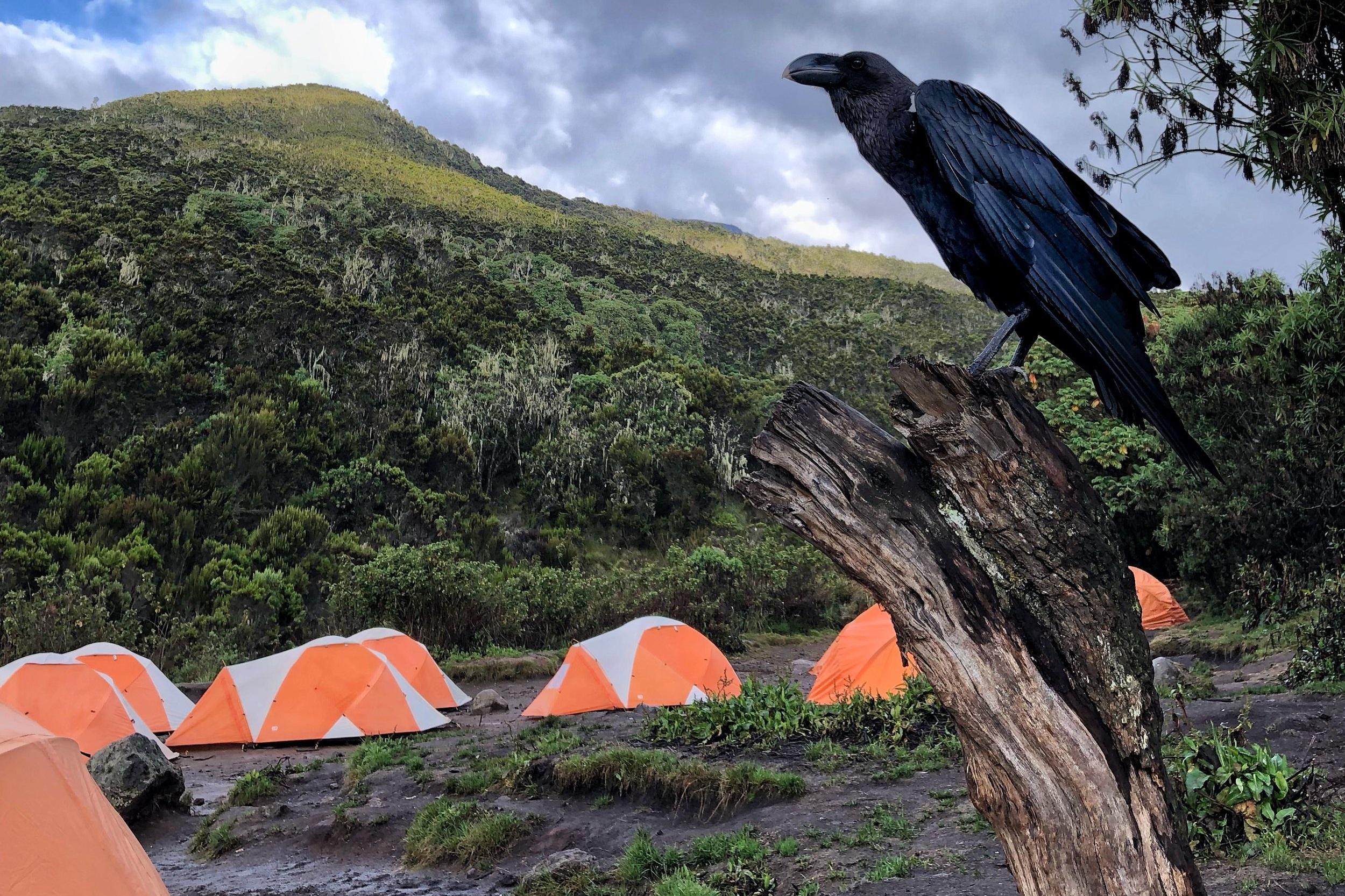 KILIMANJARO. - Mit Haix auf den Kilimanjaro.