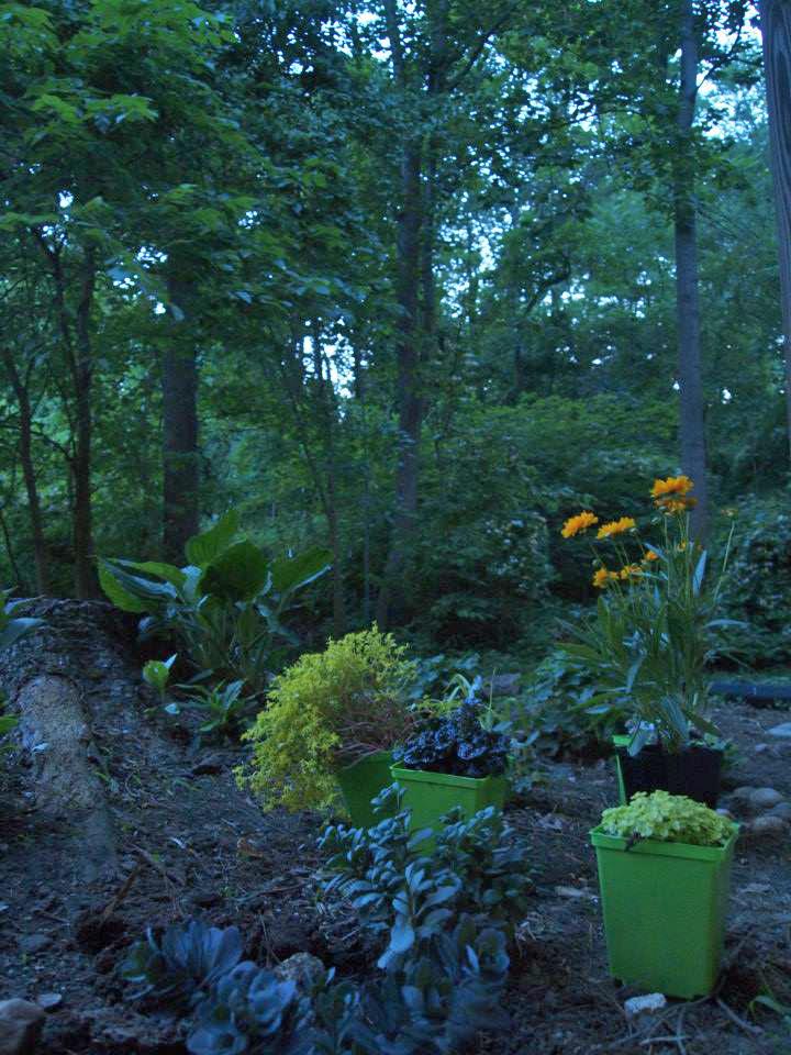 garden plans 2015_2.jpg