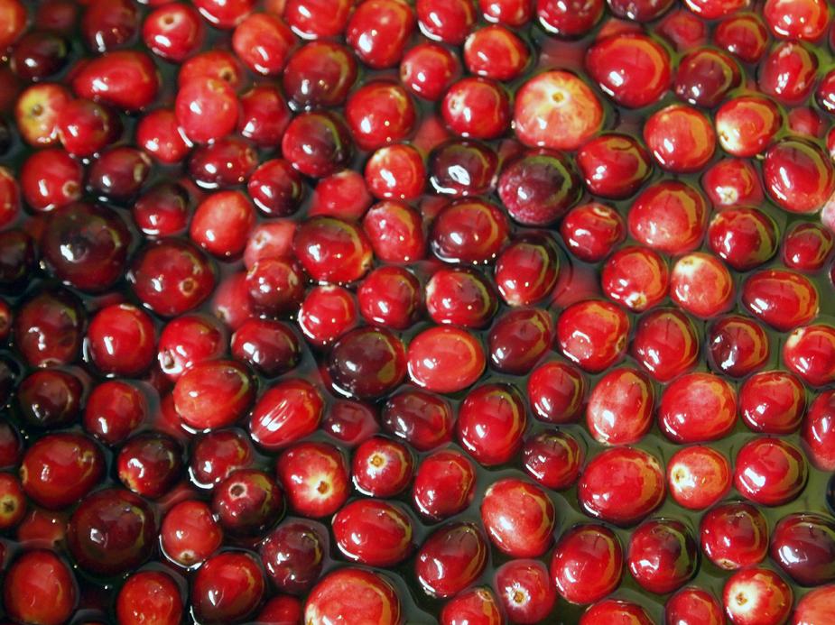 Kitchen cranberry bog.