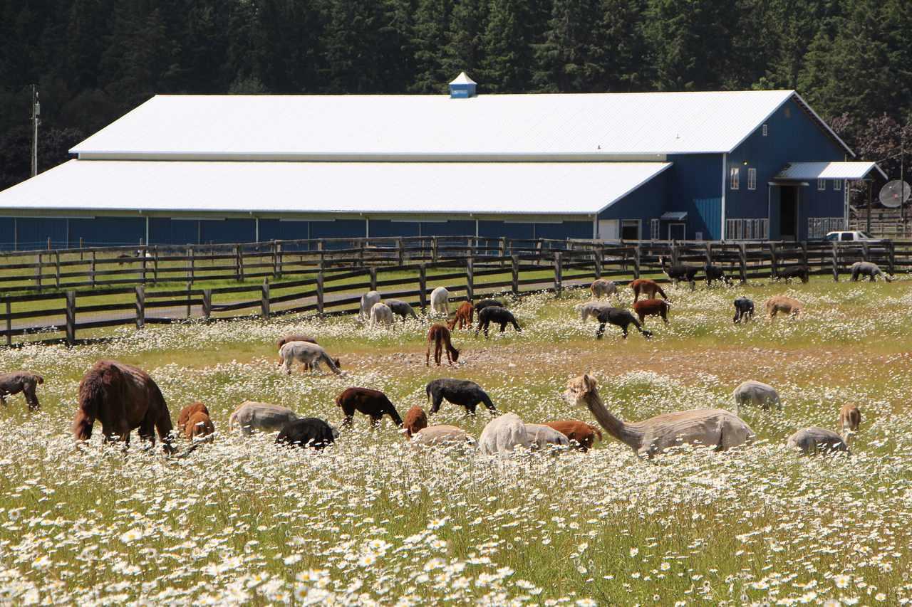 Equestrian Ranch | Tenino, WA