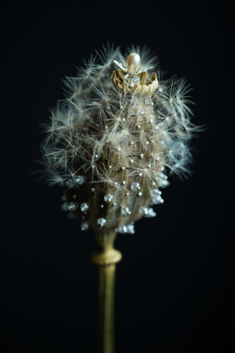 Dandelion #06, 2014, 83.4 x 120 cm/ 104 x 150 cm