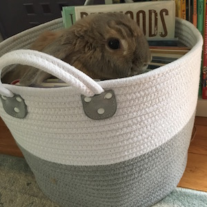 My rabbit Izzy loves to nestle in the bin we use to hold our library books!