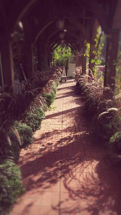 trellis path.jpg