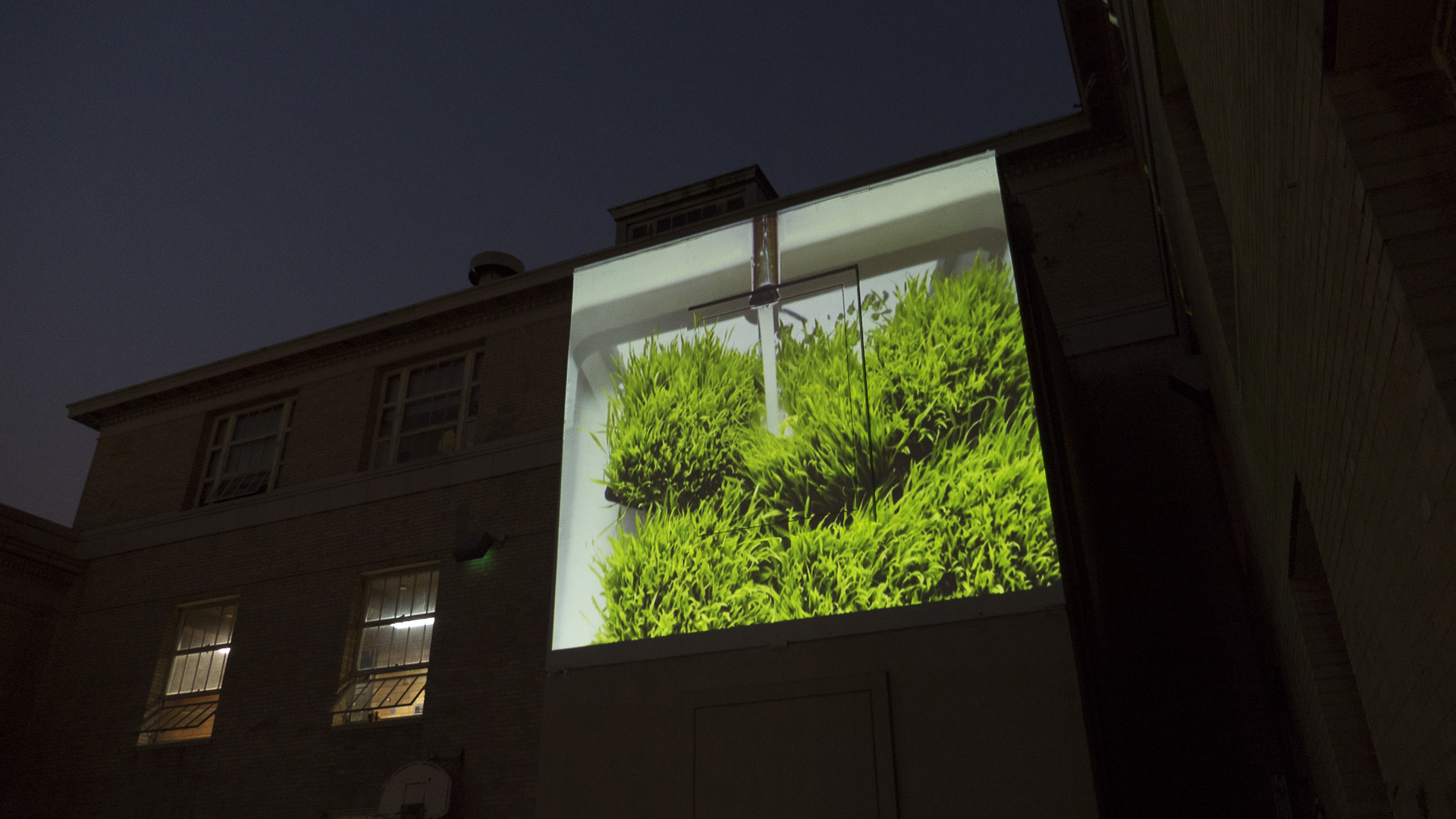 Watching the green grass grow. Video installation on High Wall at Inscape Arts. 2017