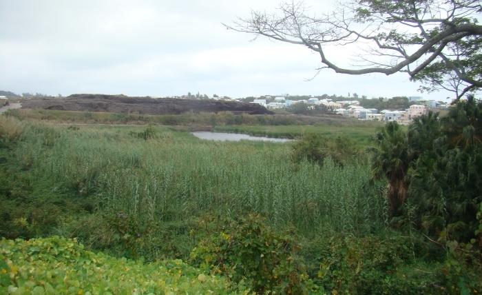 view east along marsh folly 2.jpg