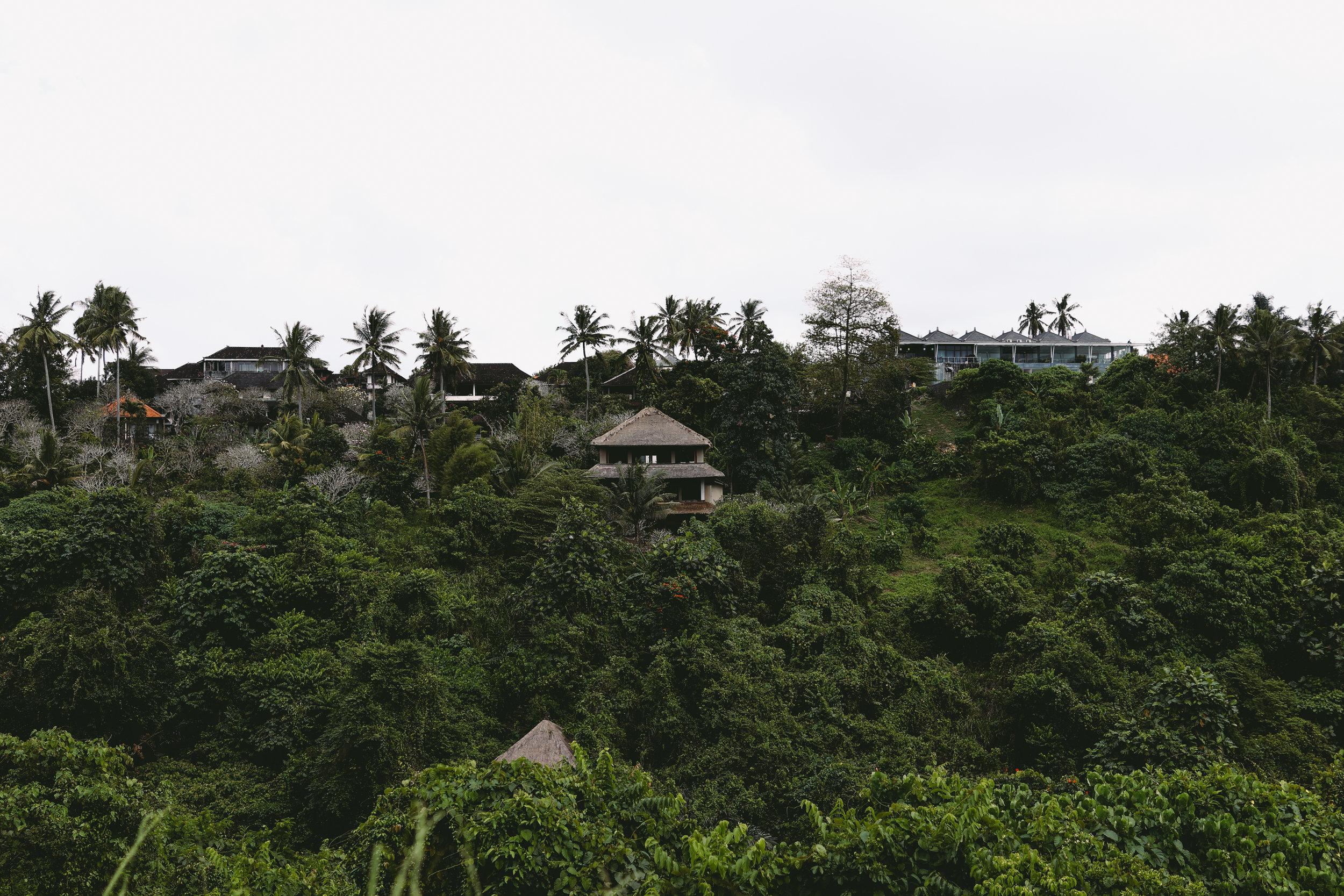 Views along Campuhan Ridge Walk