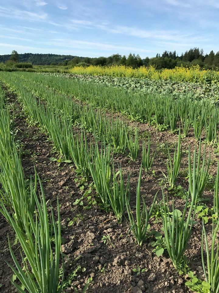farmscape.jpg
