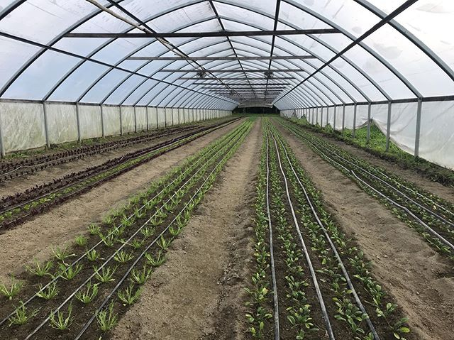 Come farm with us! We are hiring part-time crew members to help bring in the late season bounty.  Opportunities for winter work/long-term employment available. Visit our website for more details.