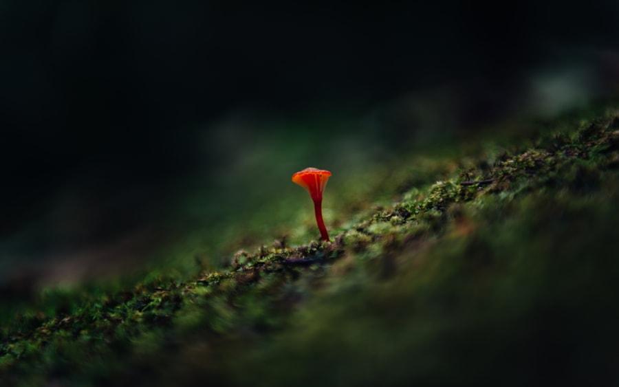 Tiny Little Red Mushroom