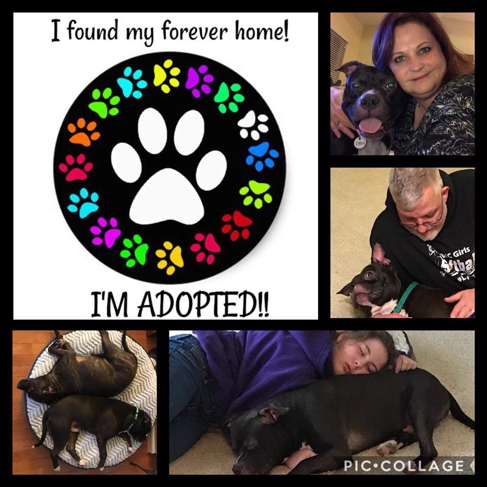 Hunter didn't get past his foster family before he was adopted!