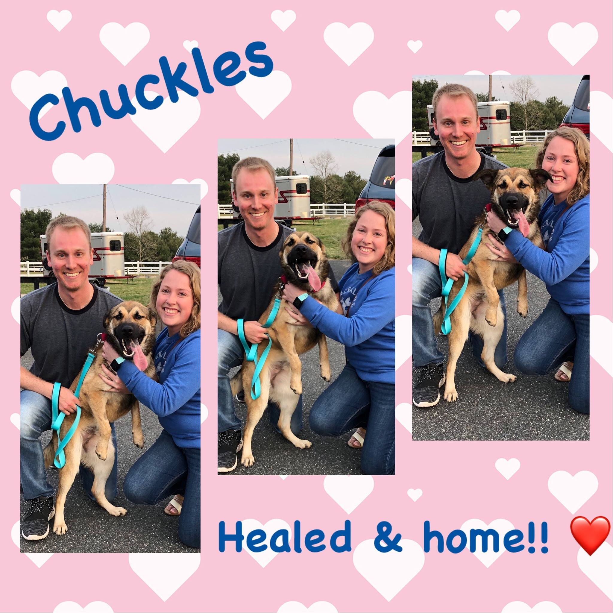 Chuckles is finally healed and in his furever home!!!